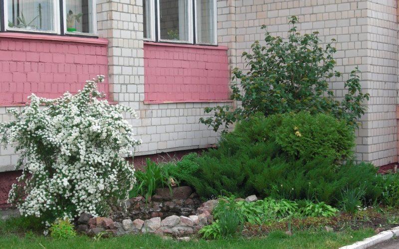 помогите пожалуйста, определить растение слева цветущее!