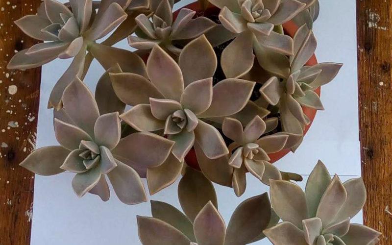 Зеленое растение с листьями в форме цветка