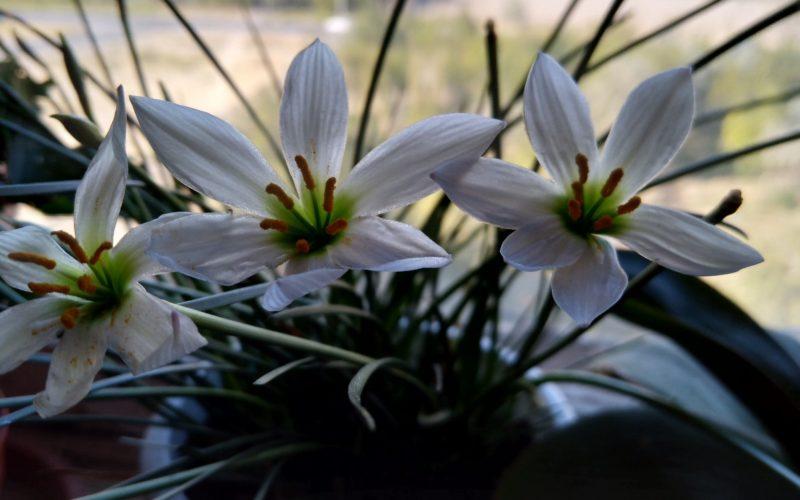 Узнать название цветка