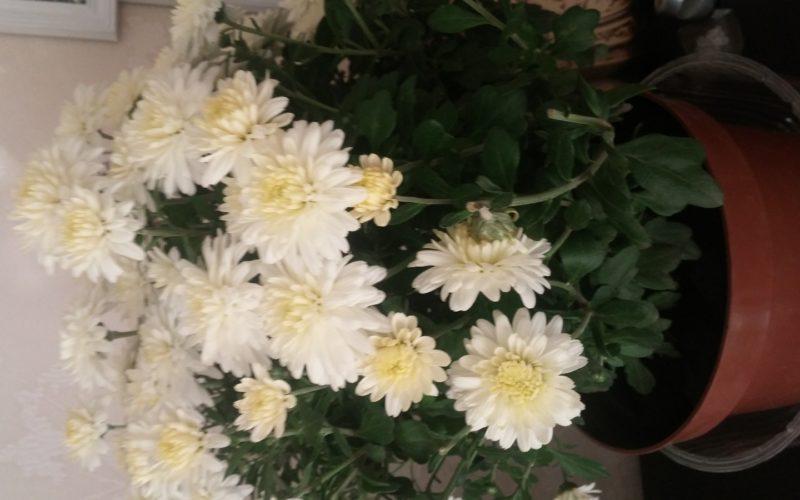 Зеленое растение с бело-желтыми цветами