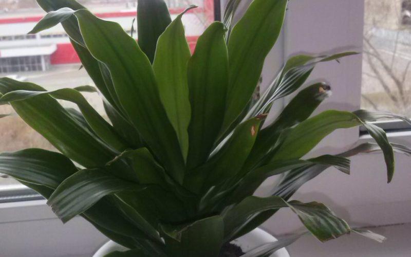 Зеленое растение, не цвело.