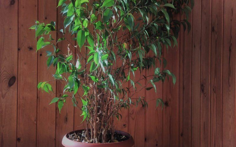 Зеленое растение, растёт кустиком