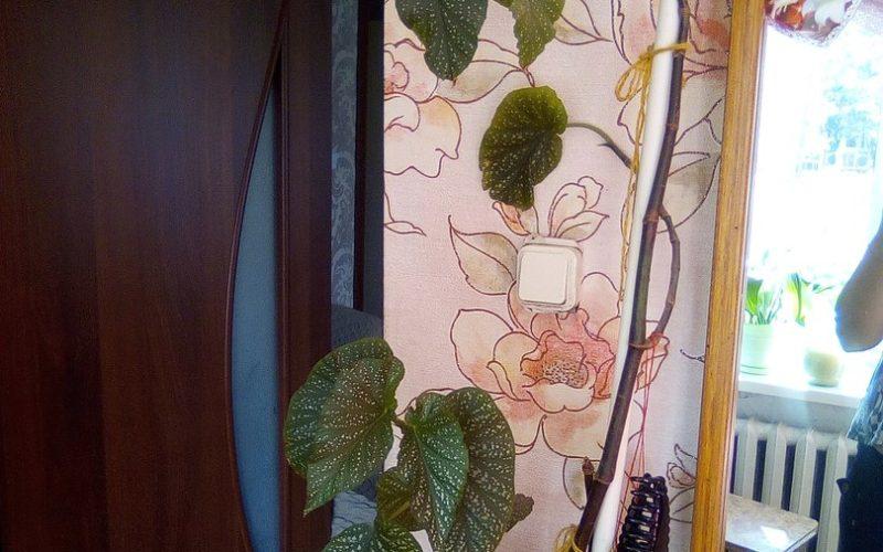 Древовидное растение