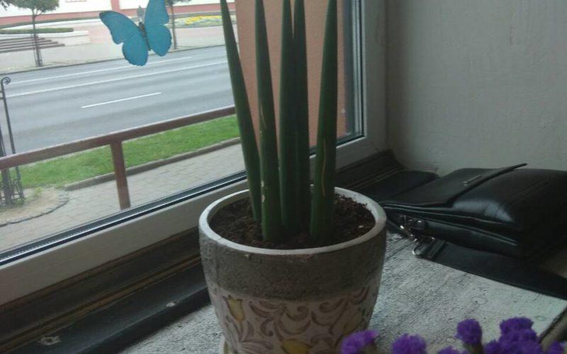 Зеленое растение без листьев