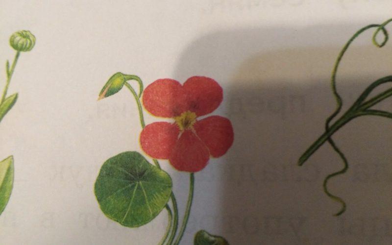 Какой цветок