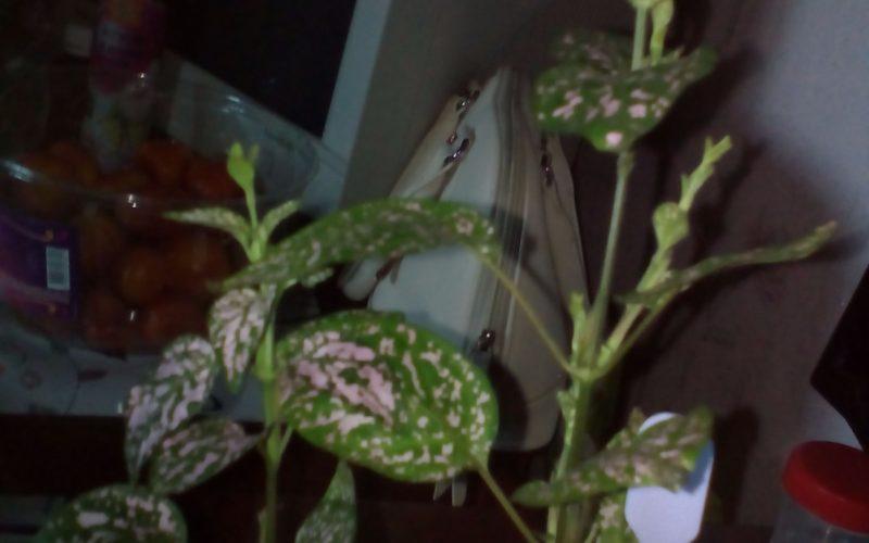 Зелёные листья с розовыми пятнами