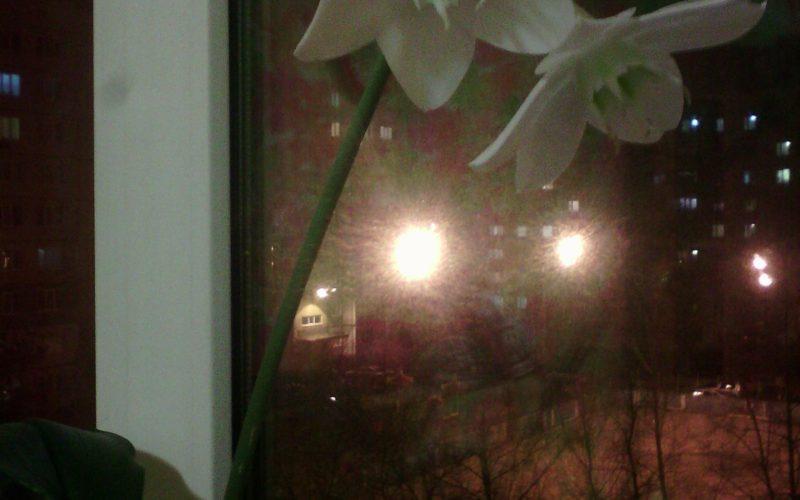 Большие белые цветки