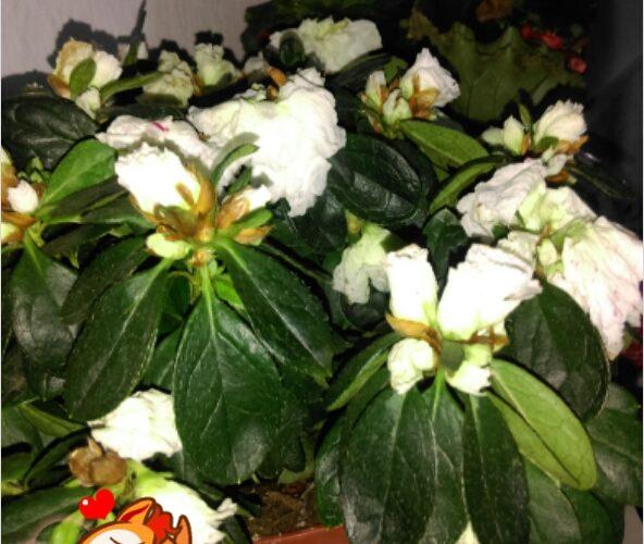 зеленое растение с белыми цветами