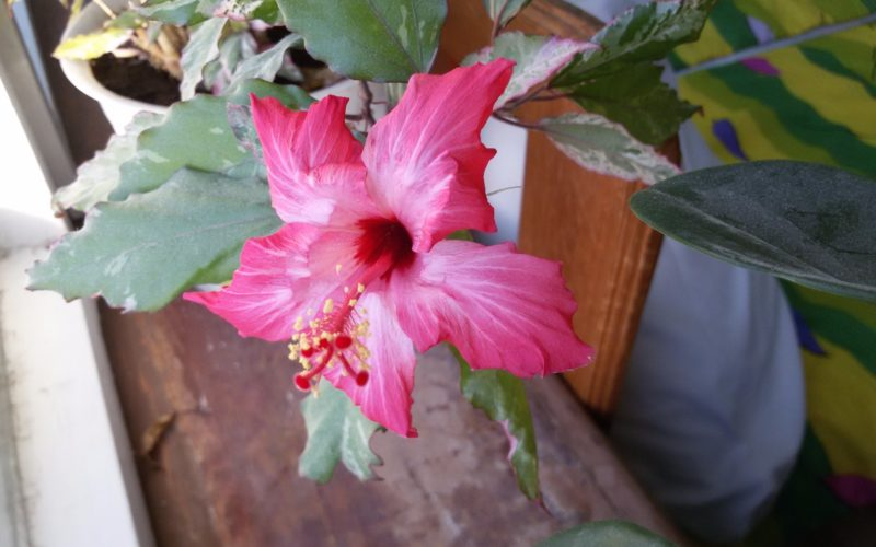 Какой цветок?