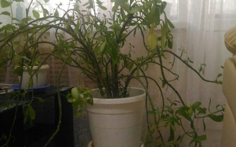 Зеленое текстильное растение