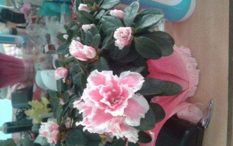 Зелёный с розовыми цветками