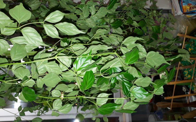 Зеленое растение, высокое
