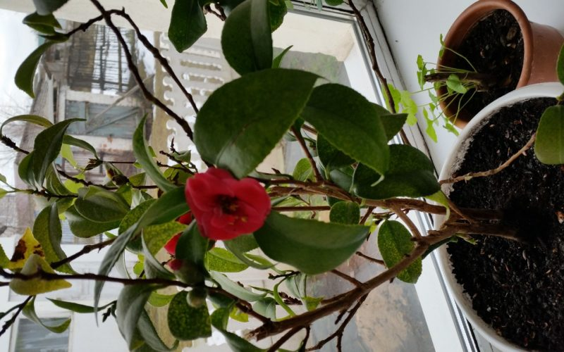 Зеленое растение с красными цветами