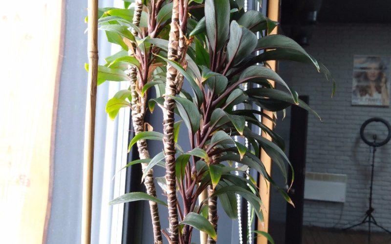 Зеленое растение с красными ножками