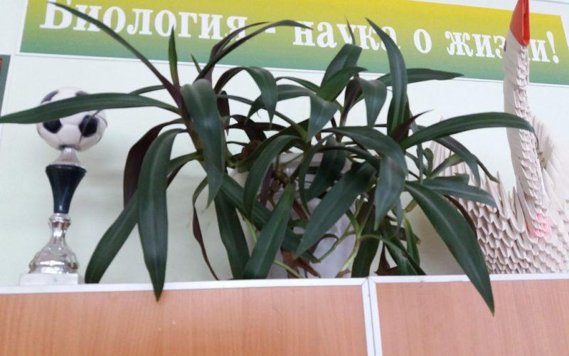 комнатное растение, не цветет