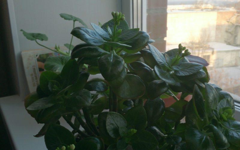 зеленое растение с цветами