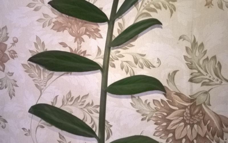 Подскажите что за растение