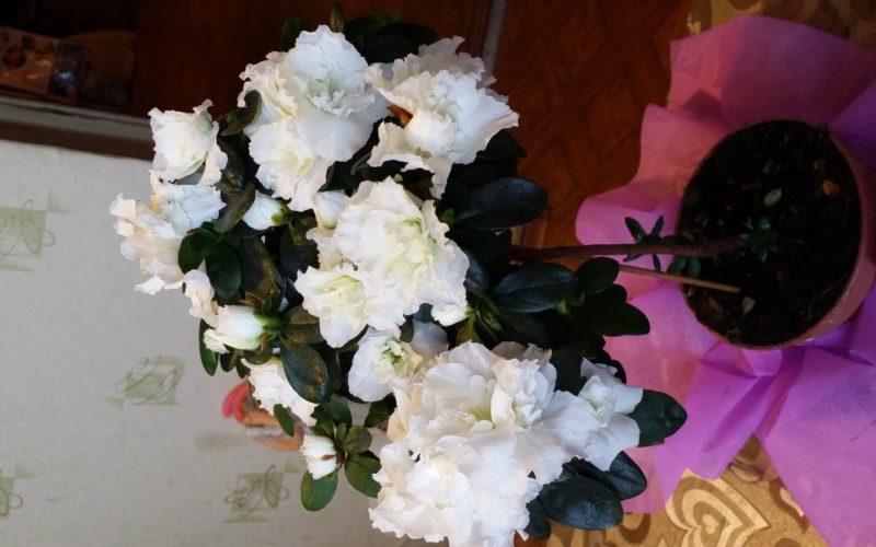 Зелёное растение с белыми цветами