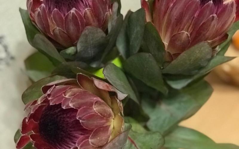 Растение со странными цветами