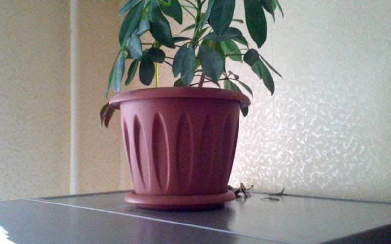 Зеленое растение похоже на пальму