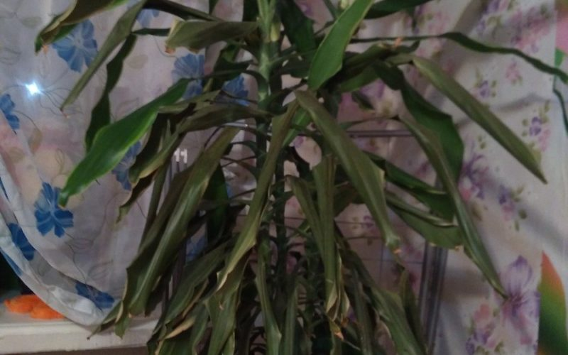 Что это за растения и что делать с ним