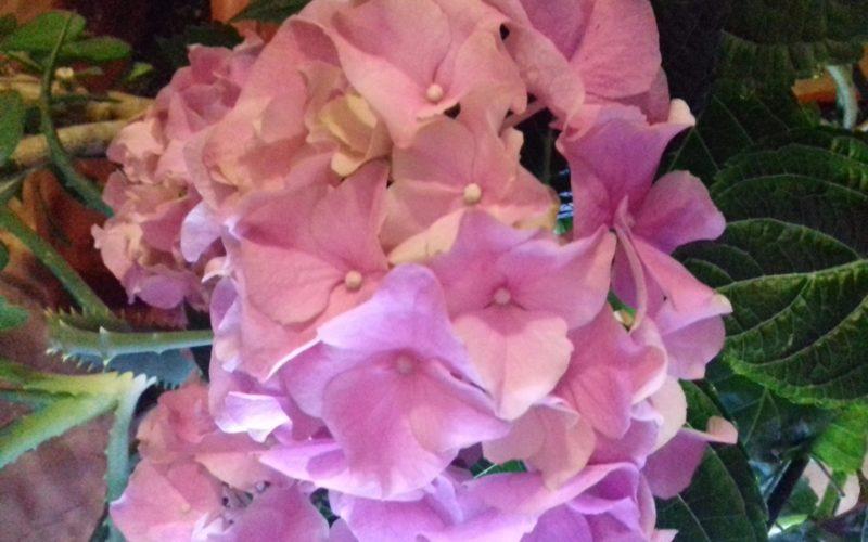 Белорозовые цветы