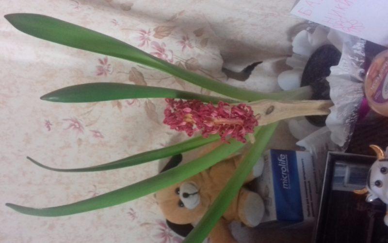 Какой это цветок???