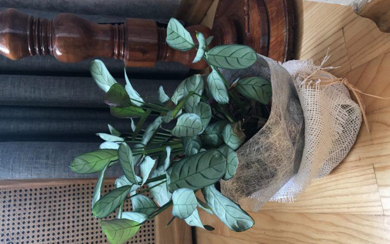 Зеленое растение с салатовым листьями