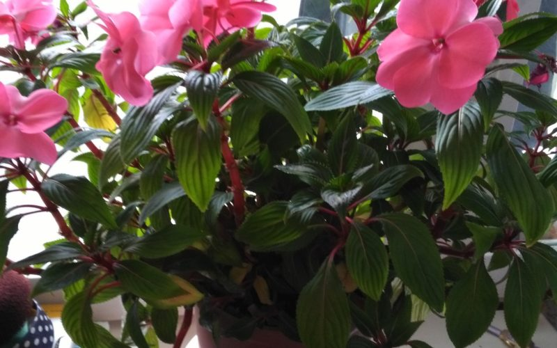 Зеленое расстение с красными цветками