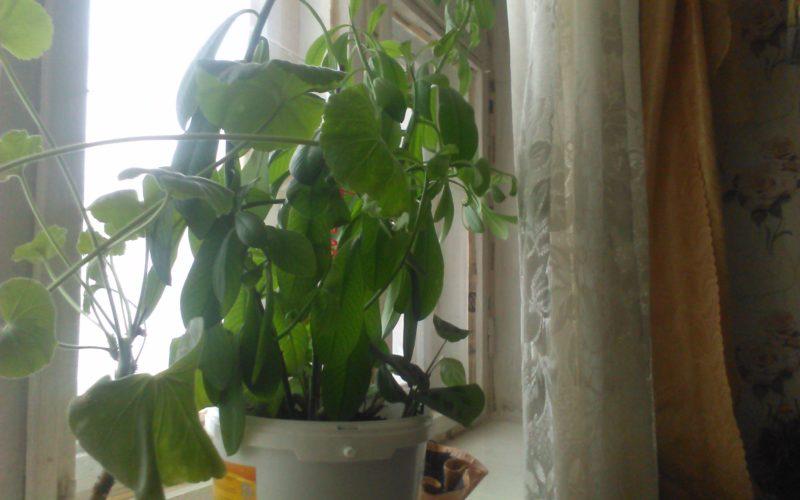 зелёное растение, в виде дерева