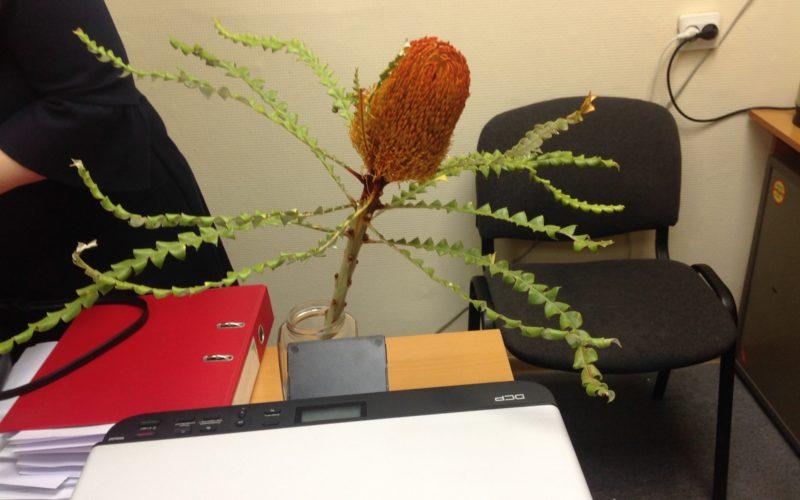 Название цветка или растения