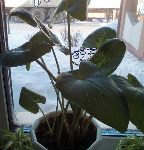 Как называется растение, подскажите!