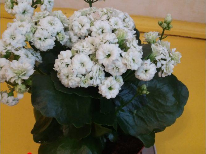 зеленые растение с белыми цветочками