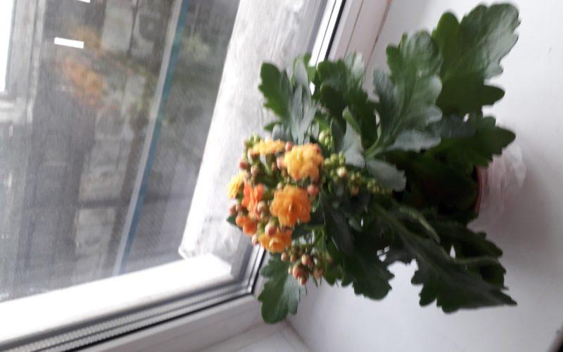 Зеленое растение с оранжевыми цветами
