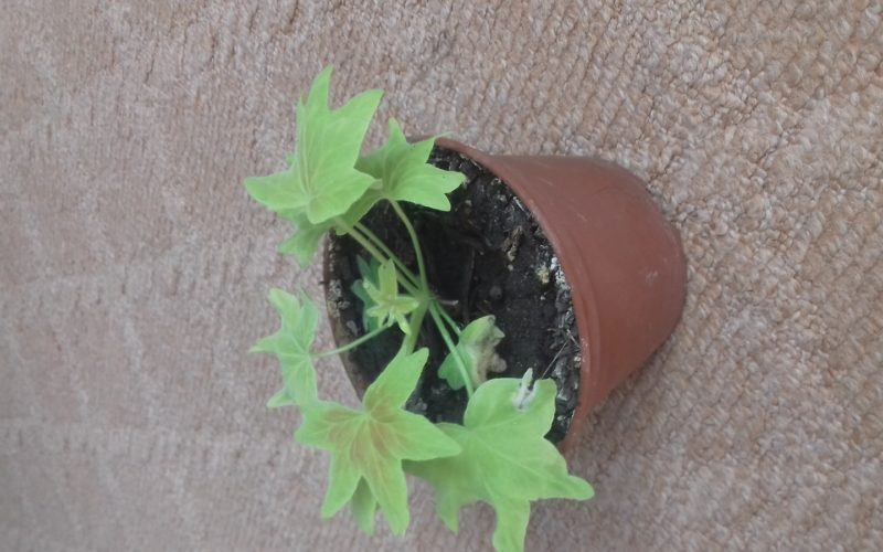 Зелёное растение без цветов