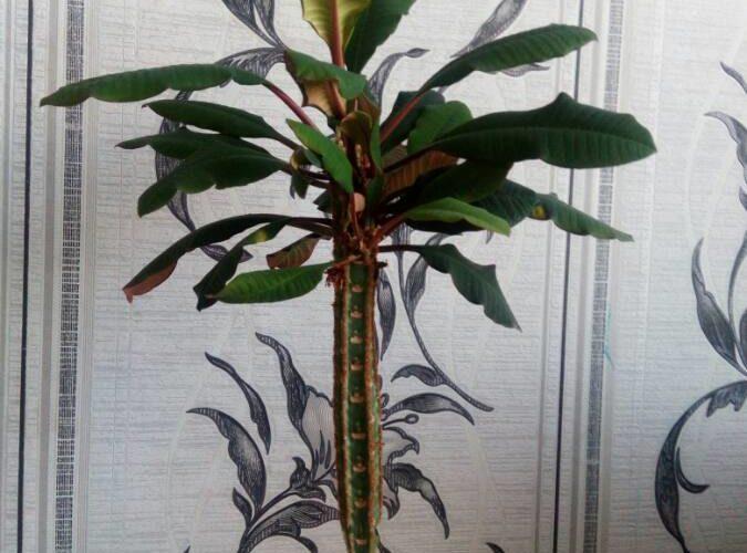 Ствол с листьями на верху