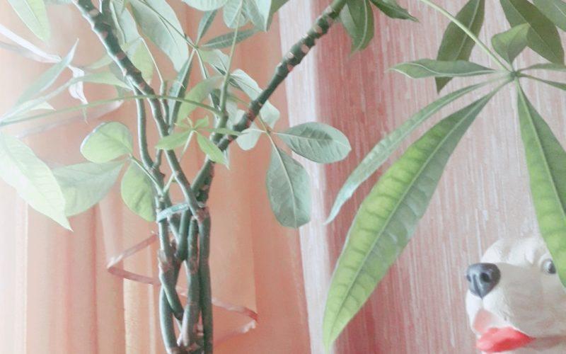 зелёная пальма с переплетением веток