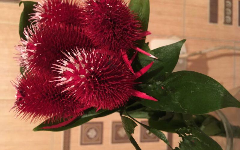 Растение с красными колючими цветами