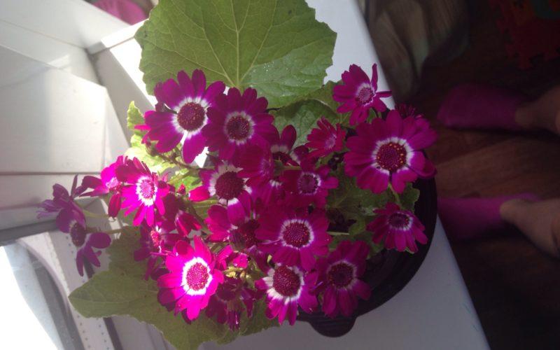 Что за цветочек?