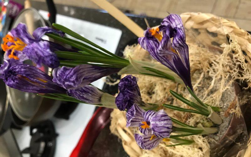 Фиолетовые цветы, с узкими листьями. Отдельностоящие стебли