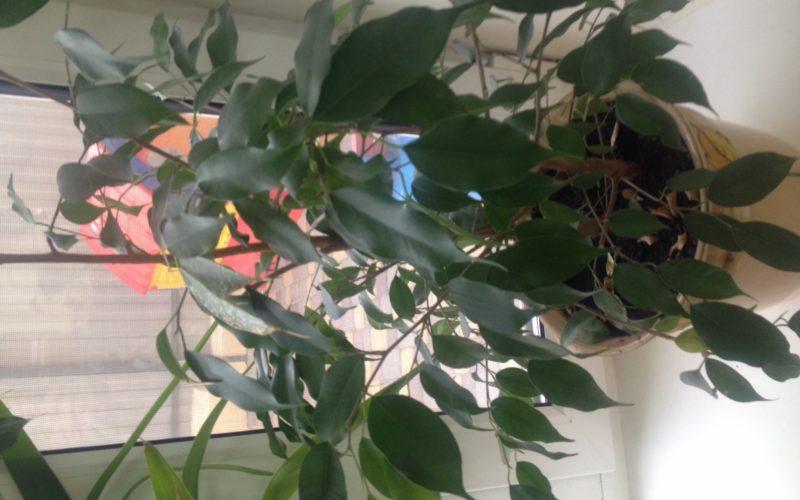 Ствол с корой, зеленые овальные листья