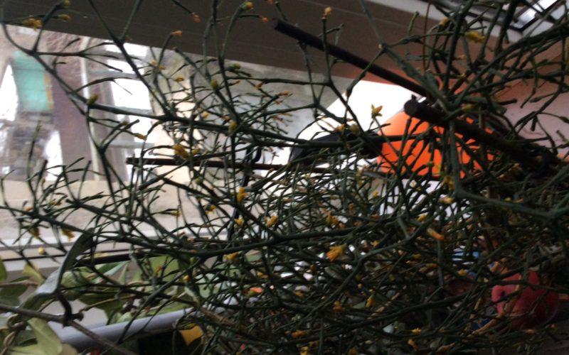 Елка с желтыми цветочками