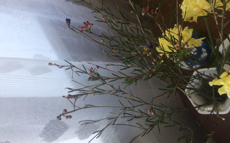 Растение с иголочками и маленькими цветочками и пахнет цитрусом