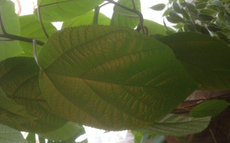 Зеленое растение, не цветет