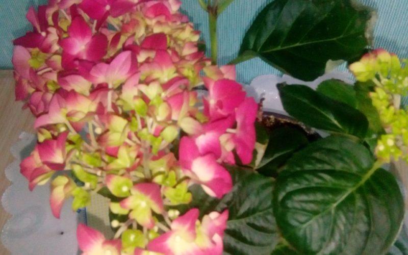 ЗЕЛЕНОЕ растение с розовыми цветочками