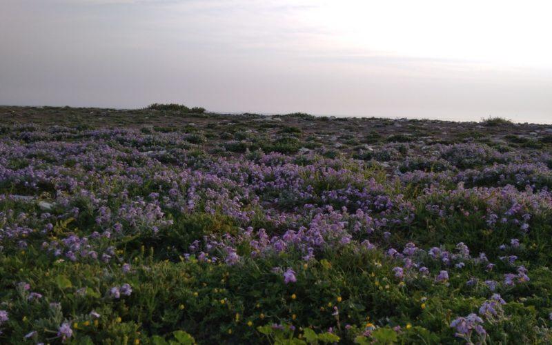 Зелёное растение с фиолетовыми цветами