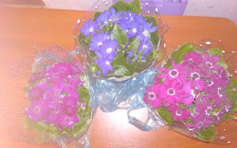 Цветок с розовыми,синими цветами