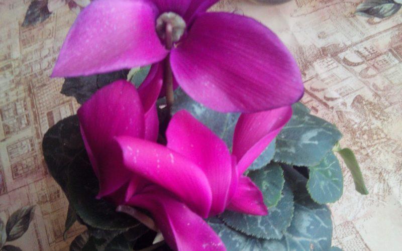 зеленое растение с фиооетовым цветком