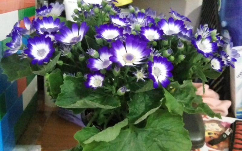 Растение с синими цветами