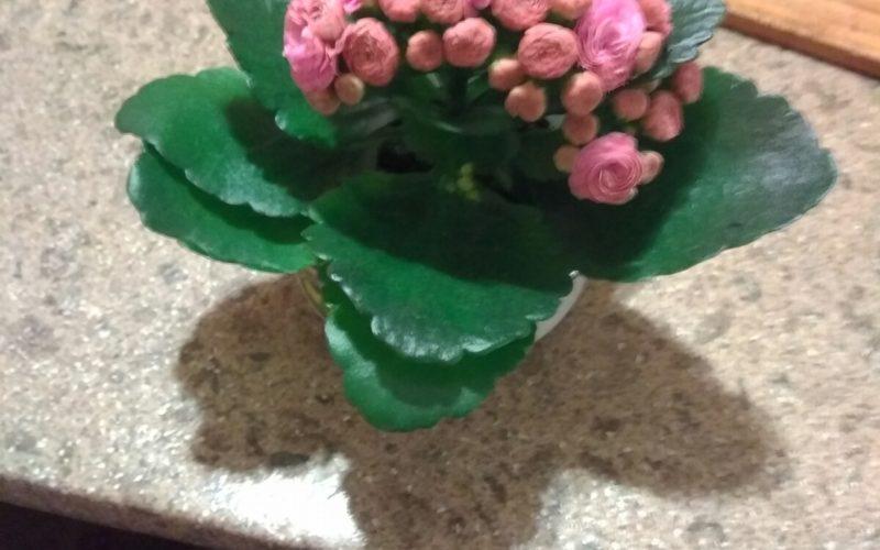 зеленое растение с разноцветными бутонами